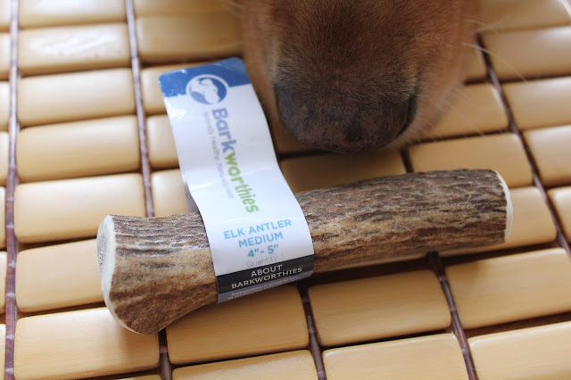 Barkworthies elk antler chew for dogs review and giveaway