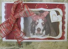 Heidi SweetFace RIP 1997-2011