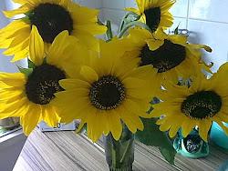 Sonnenblumen sind schön