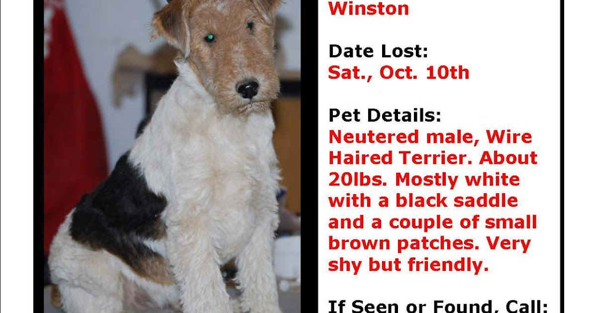 Missing Small Dog Alert: IN, Indianapolis ~ Missing Wire Haired ...