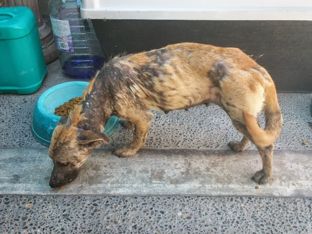 Dying Dog in the Mexican Desert Gets the Rescue of Lifetime