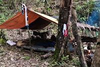 forest shelter