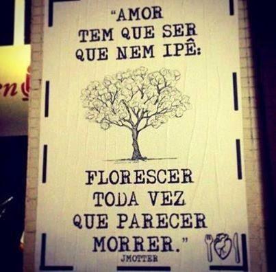 Amor tem que ser como o Ipê: Florescer toda vez que parece morrer. Via Marco Antero