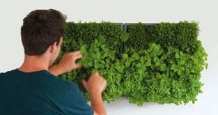 [Urban design] Urban cultivation, Urban agriculture