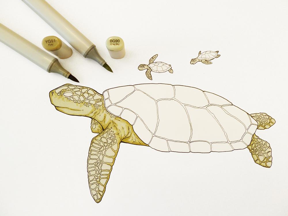 COPIC Friends Schweiz: Tutorial Meeresschildkröte