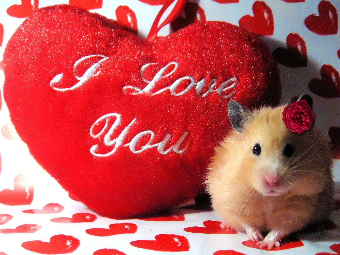 My Quotes: i love ♥ you heart HD wallpapers - I ♥ You images