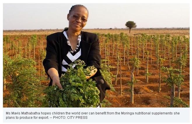 Moringa Oleifera Heroes From Africa MAVIS MATHABATHA