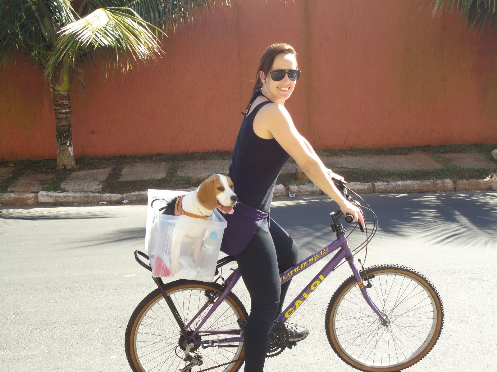 Bolsa Para Levar Cachorro Na Bicicleta : C?es e bike