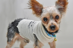 ASPCA rescues puppy thrown in trash chute