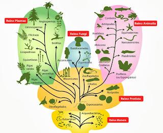 Evolução dos animais