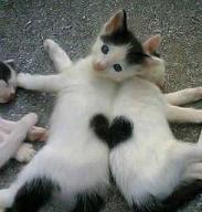 Puro y eterno Amor
