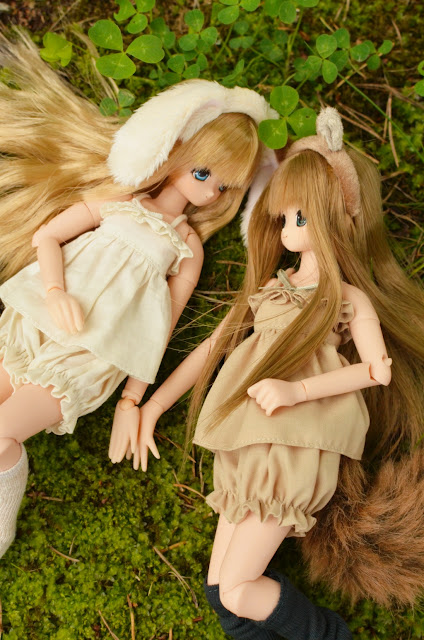 azone excute animals of the forest