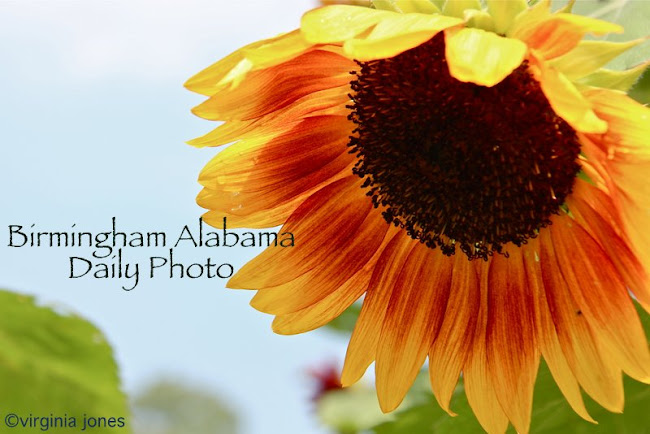 Birmingham Alabama Daily Photo