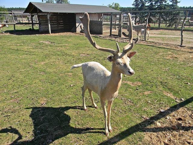 jak trafić do mini zoo w Mostkach?