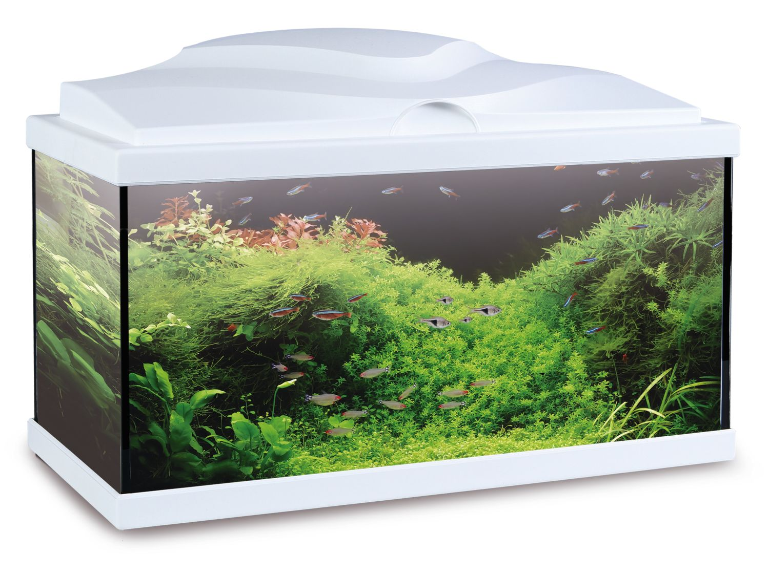 Ocen fish aquarium home for Aquarium boule 20 litres