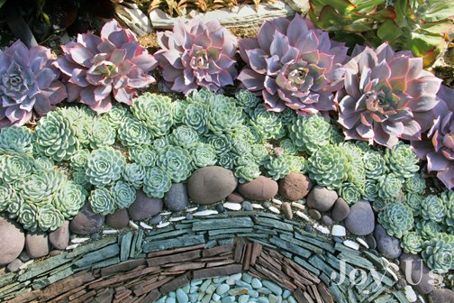 Sherman Garden Succulents