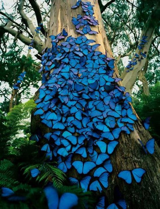 Fotos impresionantes de la naturaleza