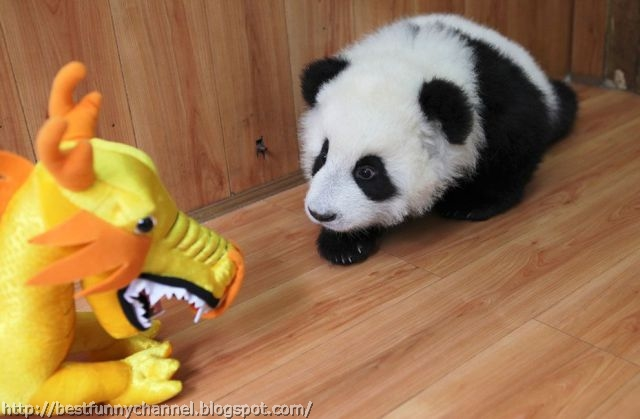 Funny little panda.