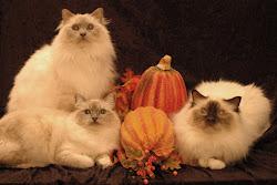 My Feline Family