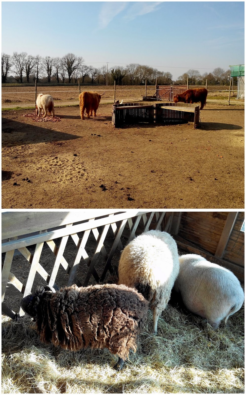 ferme, ferme de la chasseloire, st herblain, mouton, chèvre, bullelodie