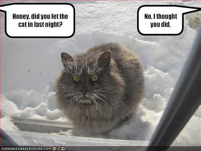 Funny Cat Pictures With Captions #14