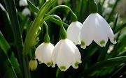 Imagini de primavarapeisaje cu flori de primavara poze si imagini pentru .