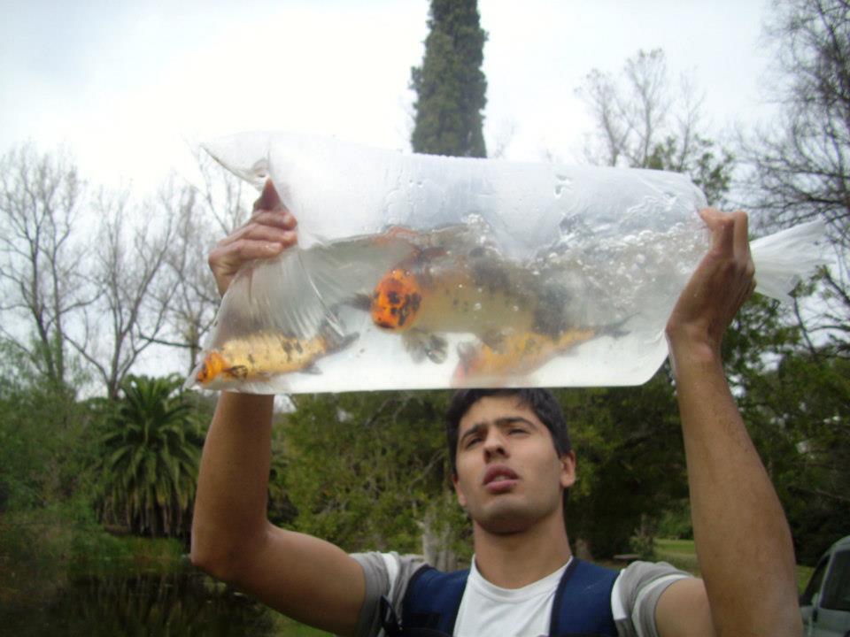 Ilusi n de pescar carpas koi en el lago del parque for Carpas ornamentales