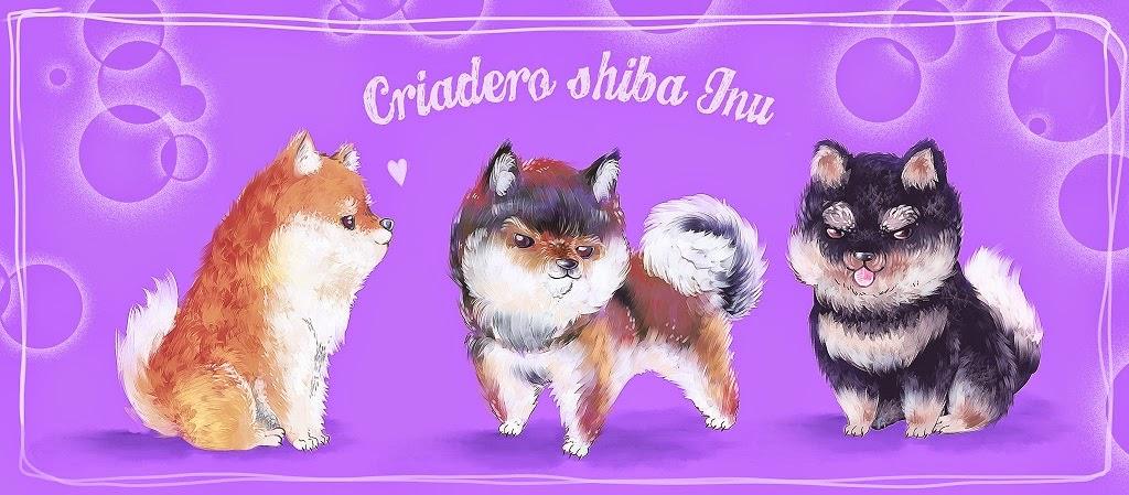 Criadero Shiba Inu