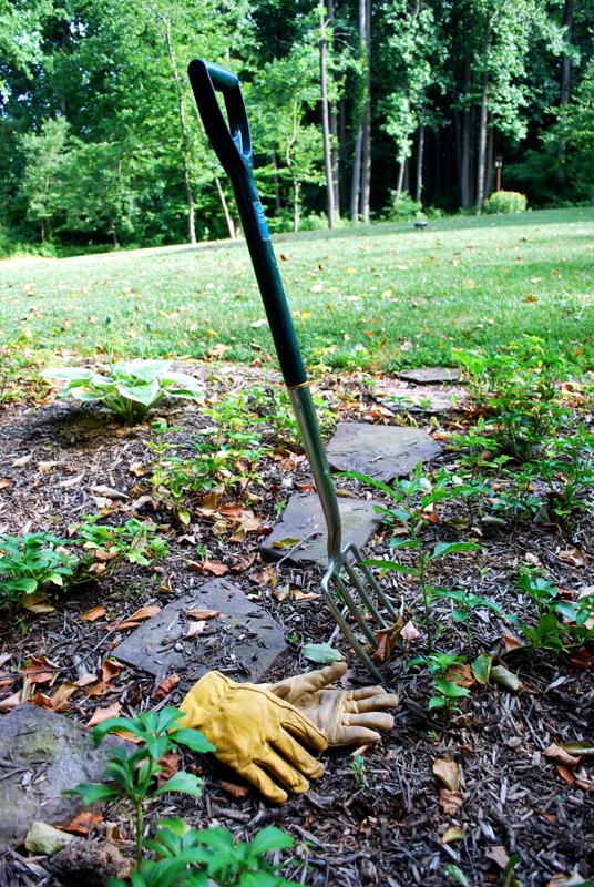 my home garden essay