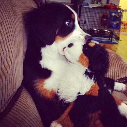 adorable animals with toy versions-10