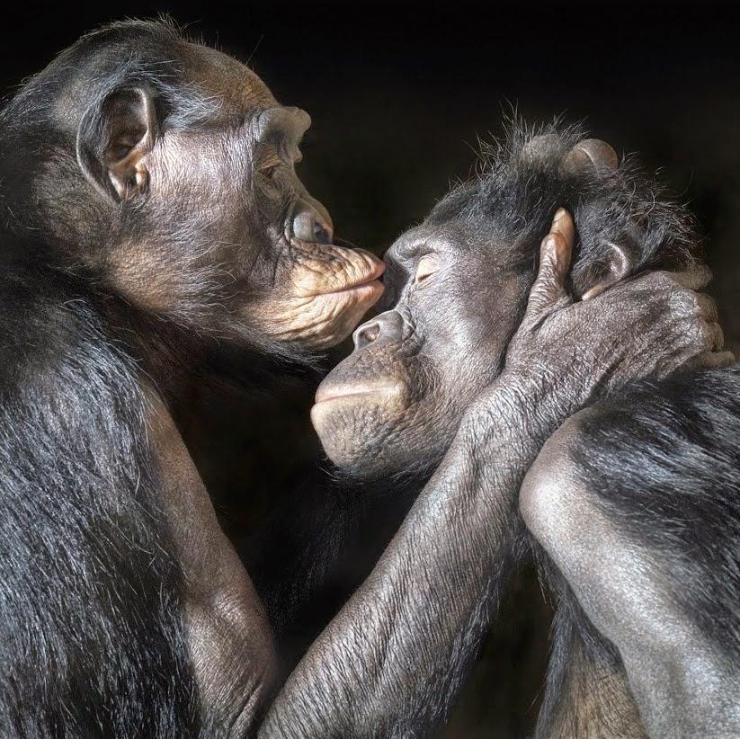 любовь это животное чувство вызываемое гормонами, человек не отличается от обезьяны