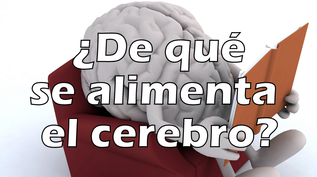 ¿De qué se alimenta el cerebro?