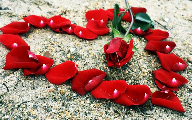 Foto met rode rozenblaadjes en roos