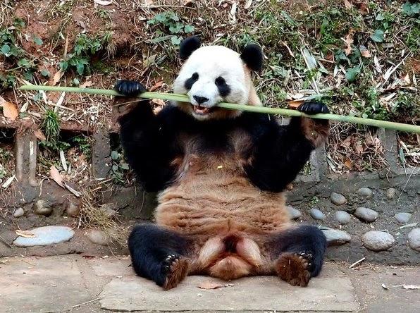 EDISI MACAI Siapa Kata Rugi Bela Panda Pungut Lebih RM 1 Juta Kurang 2 Bulan
