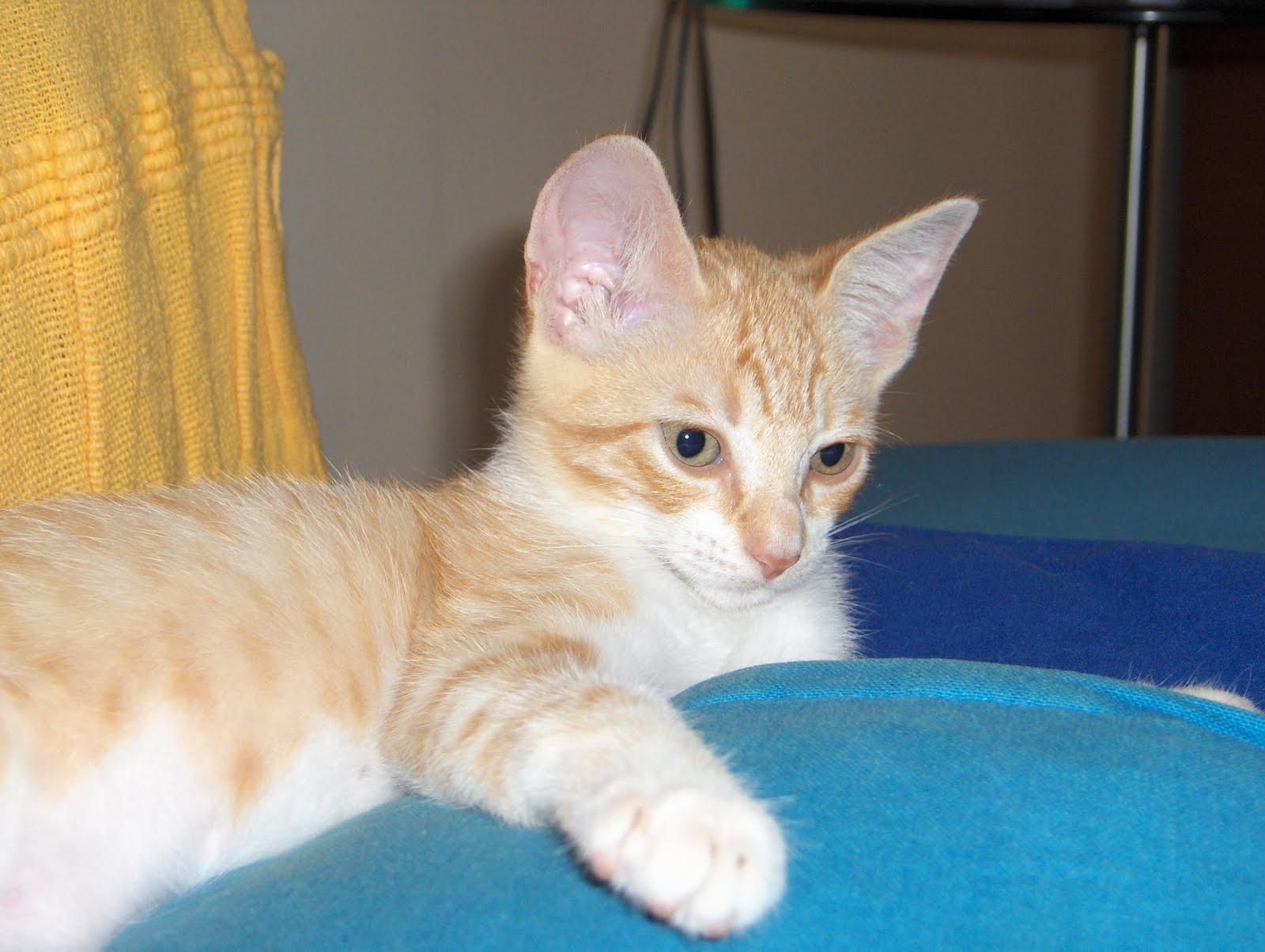 Entre todos los que había, la vista se nos paró en un gatito de dos meses, amarillo y blanco. Desde que la cogí en brazos supimos que era ella,