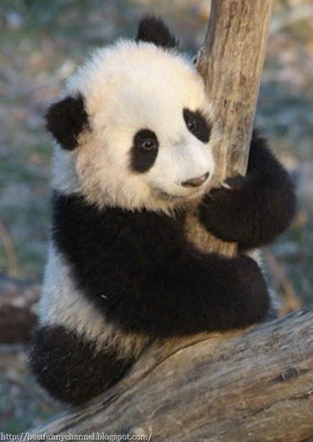 Funny small panda.