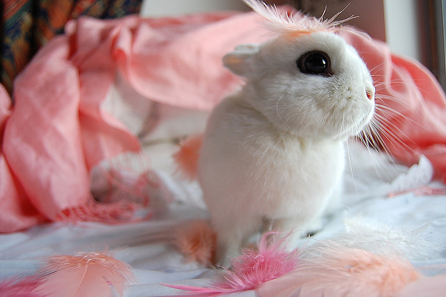 Baby Bunny  cute images