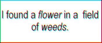 Eres una flor que encontré entre un campo de hierbas.