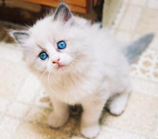 Nomes Para Gatos Com a Letra C