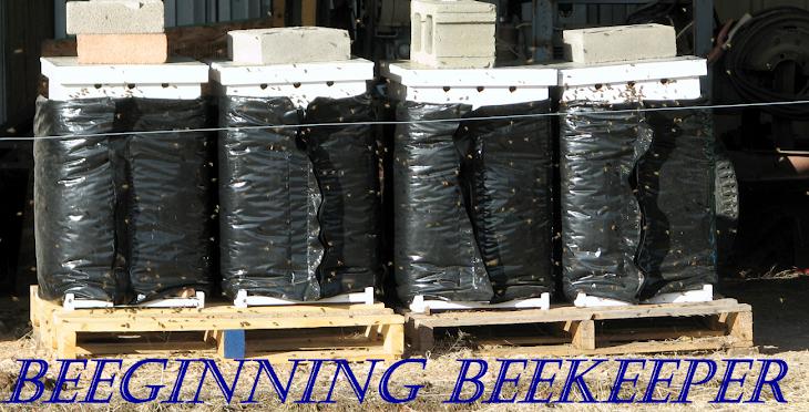 Beeginning Beekeeper