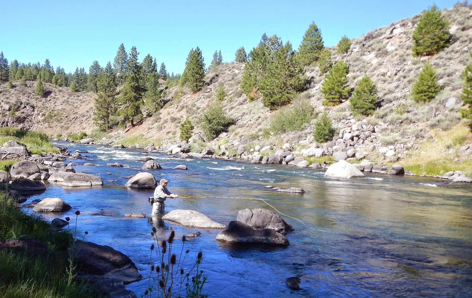 California fly fishing march 2015 for Canyon lake fishing ca