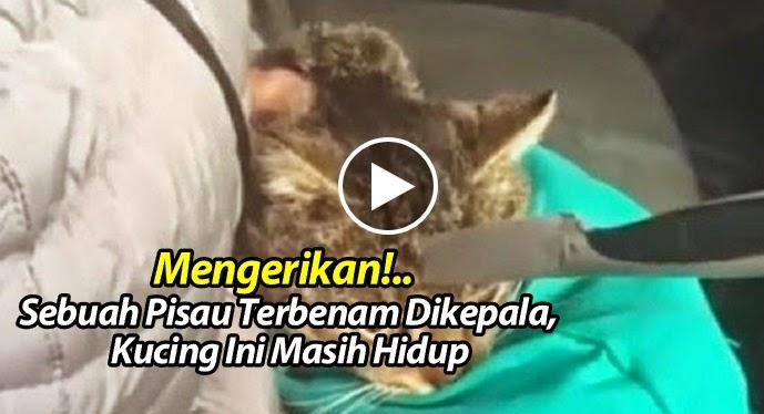Video- Mengerikan! Sebuah Pisau Terbenam Dikepala, Kucing Ini Masih Hidup.