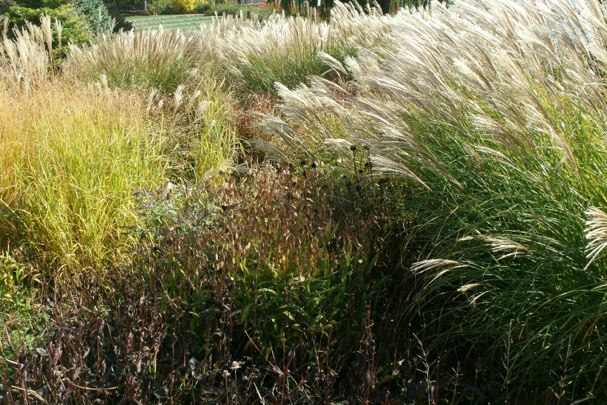 Shimmering ornamental grasses at Toronto Music Garden by Paul Jung Toronto organic ecological gardening services