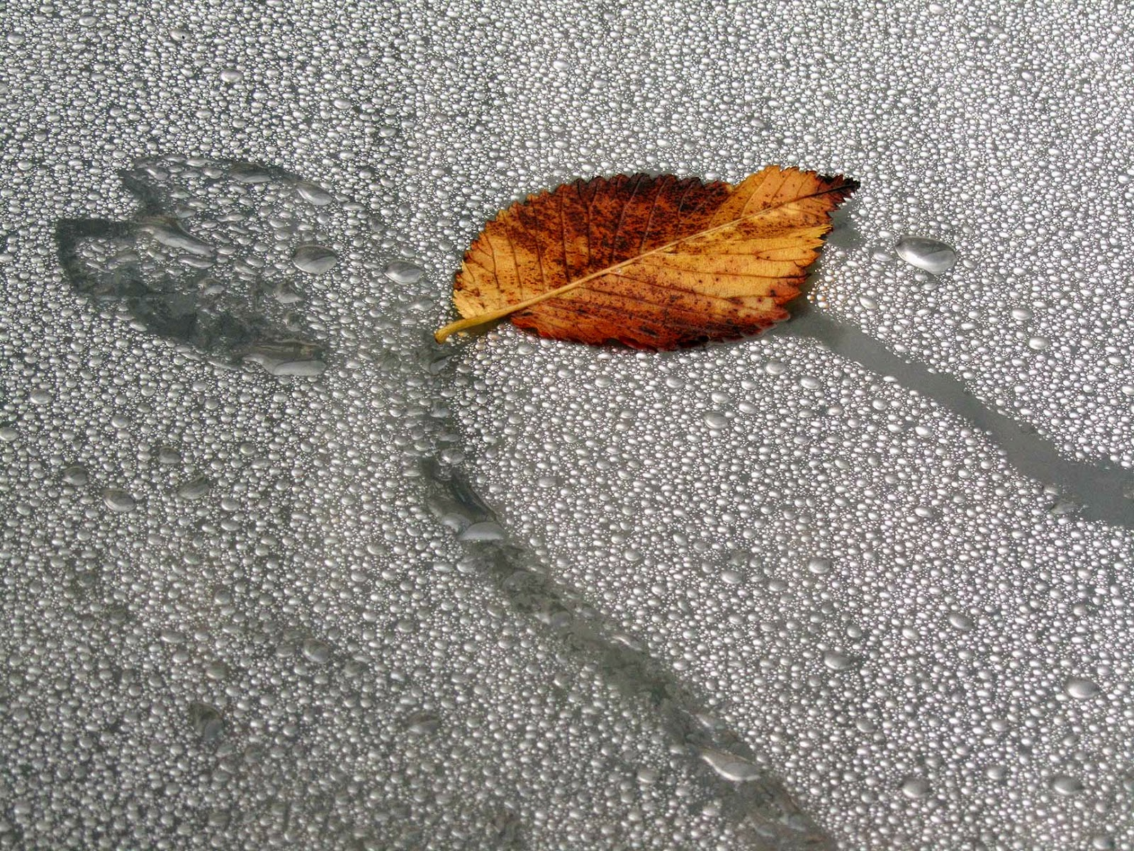 leaf and lots of tiny drops