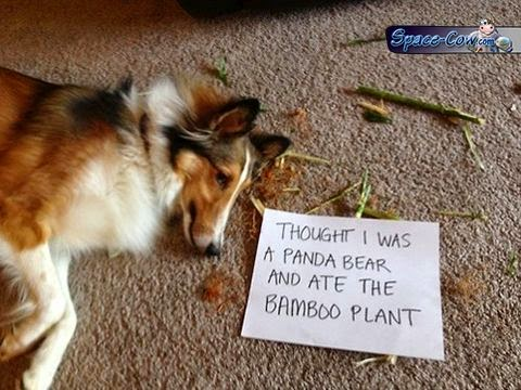 funny dog message picture