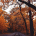 Autumn Wallpaper