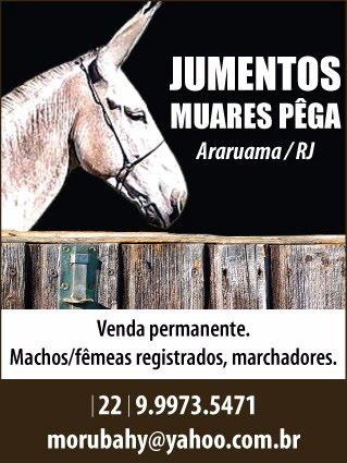 Contato: Roberto Lloréns                                                  Membro da ABCJPêga