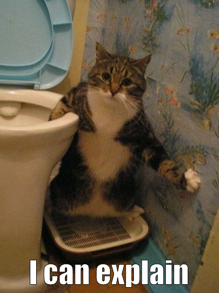 Cat In The Toilet - I Can Explain