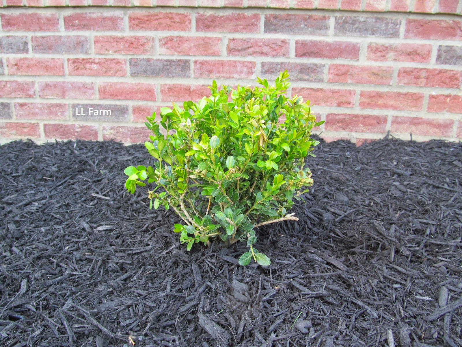 Ll Farm Landscaping The Cheap And Free Way