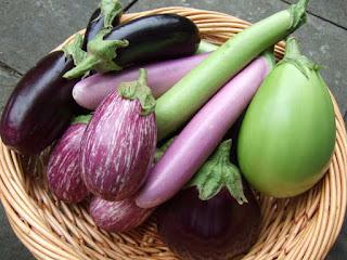 Eggplant | Aubergine Brinjal Eggplant - Melongene Brinjal - Guinea Squash